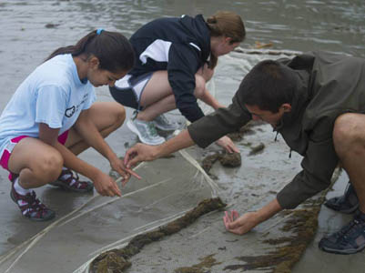 check out AIO marine science camp programs